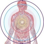 Участие железа в функциях человеческого тела